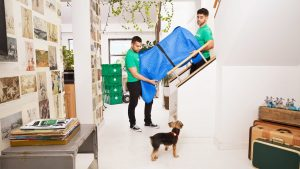 Tips to identify the geniuses of Moving companies